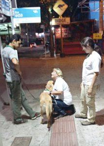 Der erste Tag des Einarbeitungs-Lehrganges, wir üben gerade gehen mit der Hundehalterin und Hund Fayal.