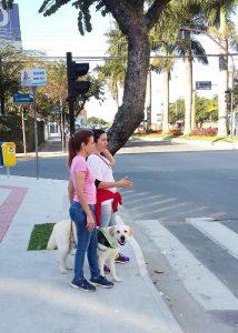 Hund Kant zeigt beim Einarbeitungs-Lehrgang den Zebrastreifen an
