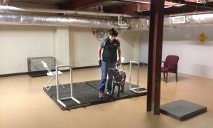 """Blindenhund-Trainingsraum bei """"Guiding Eyes for the Blind"""". Hier lernen die Hunde in ruhiger, minimalistischer Umgebung das Anzeigen von Seiten, Boden- und Höhenhindernissen. Am Anfang ist es sehr wichtig, an einem ruhigen Ort ohne Ablenkungen zu üben, damit der Hund sich konzentrieren kann."""