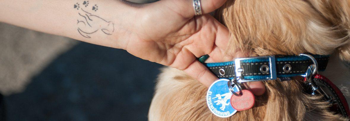 Halsband und Hundemarke eines Blindenhundes